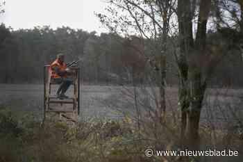 Ondanks jachtverbod door corona blijft everzwijnpopulatie st... (Dessel) - Het Nieuwsblad