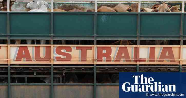 Australian government ordered to pay NT company $3m damages over live cattle ban