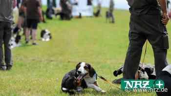 Kreisjägerschaft zeigt auf der Laga Kamp-Lintfort ihre Hunde - NRZ
