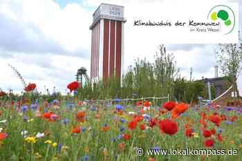 Info-Stand auf der Landesgartenschau in Kamp-Lintfort während der Klimawoche vom 21. bis 27. Juni 2020: Klimabündnis der Kommunen im Kreis Wesel - Wesel - Lokalkompass.de