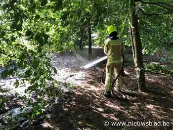 Brand(je) breekt uit in bos Toekomstlaan