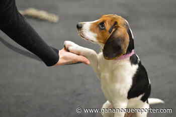 Preparing your home for a 'pandemic puppy' - Gananoque Reporter