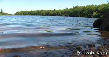 Moncton cautions residents about blue-green algae in Irishtown Nature Park