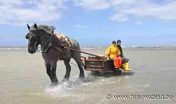 """Katrien (27) mag zich pas de tweede vrouwelijke paardenvisser noemen: """"Ik leer nog dagelijks bij"""""""