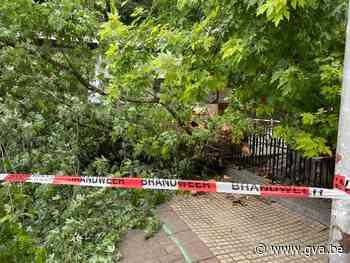 Leraar gewond nadat bijna 100 jaar oude boom deels naar beneden komt - Gazet van Antwerpen