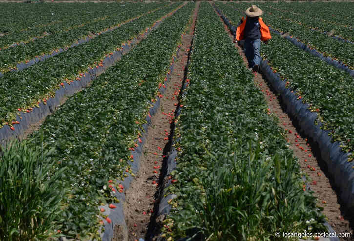 95 Residents In Oxnard Farmworker Housing Facility Test Positive For COVID-19