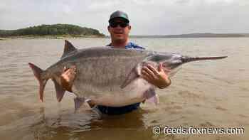 Oklahoma angler snags possible world record-breaking paddlefish, officials say