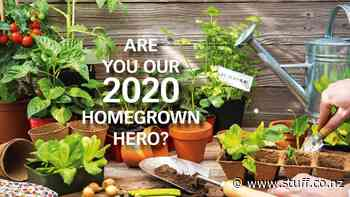 Nominate the 2020 Gardener of the Year - Stuff.co.nz