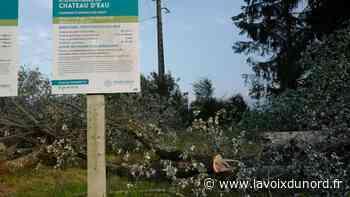 Avesnes-sur-Helpe : des arbres à terre à deux pas du stade - La Voix du Nord