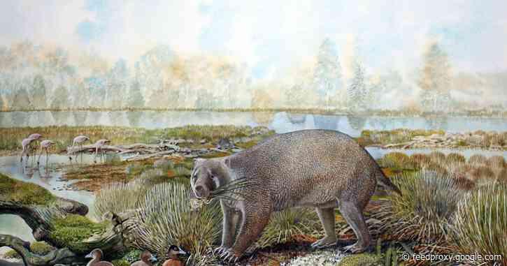 Big-boned marsupial unearths evolution of wombat burrowing behaviour
