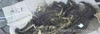 Shock a Nocera Inferiore, cane bruciato vivo e gettato nei rifiuti - L'Occhio di Salerno