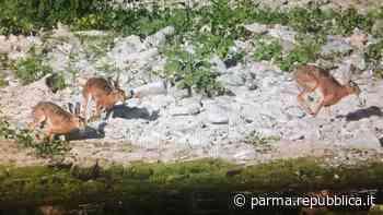 Sfalci nel torrente Parma, botta e risposta fra ambientalisti e Aipo - La Repubblica