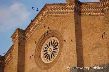 Parma, il carosello dei rondoni davanti a San Francesco del Prato - La Repubblica