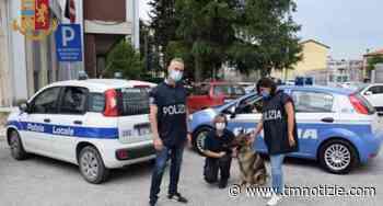 Ascoli Piceno: cane anti droga scopre stupefacenti in un'officina, arrestato pusher ⋆ TM notizie - ultime notizie di OGGI, cronaca, sport - TM notizie