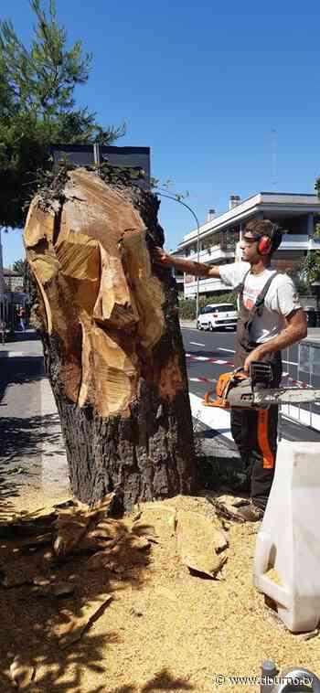 MONTEROTONDO - Gli alberi abbattuti diventano opere d'arte - Tiburno.tv Tiburno.tv - Tiburno.tv
