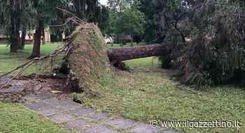 Torna il maltempo: la bufera sradica alberi ad Azzano Decimo e a Brugnera - Il Gazzettino