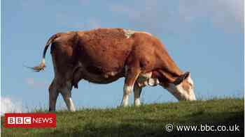 UK-US trade: New body to advise on welfare and competition in farming
