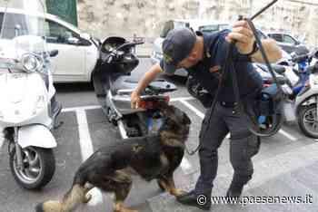 Caserta / Caivano / Casagiove – Spaccio di droga, sgominata banda: 5 arresti - Paesenews