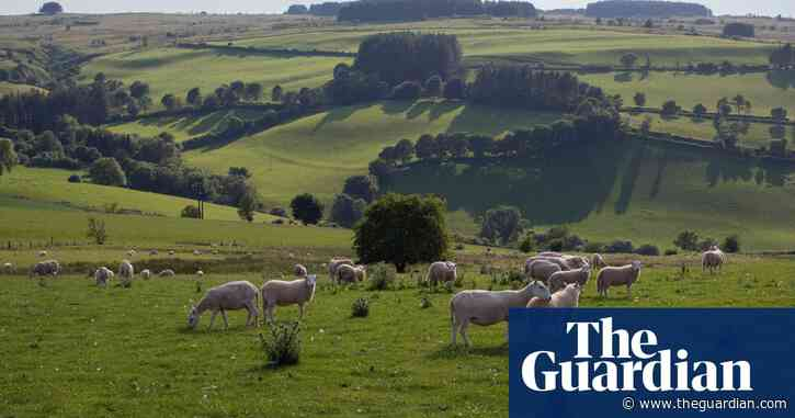 Britain beyond lockdown: can we make more space for nature?