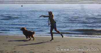 Cornwall beaches with dog bans that come into force on July 1 - Cornwall Live