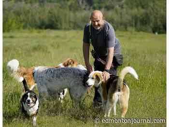 Edmonton man expanding his dog-walking business into million-dollar business - Edmonton Journal