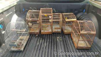 Pássaros silvestres são resgatados de cativeiro em Cabo Frio após denúncia ao Linha Verde - Plantão dos Lagos