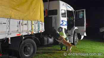 En Sauce de Luna hallaron 233 kilos de droga en tanque de combustible de un camión - entreriosya