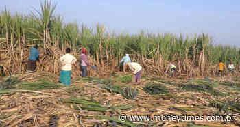 Produção e exportação de açúcar da Índia podem ter salto em 2020/21, diz... - Money Times