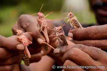 Locust attack: Helicopters deployed to control swarms in Rajasthan's desert areas