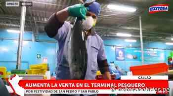 Callao | Día de San Pedro y San Pablo: aumenta la venta de pescado en el terminal - exitosanoticias