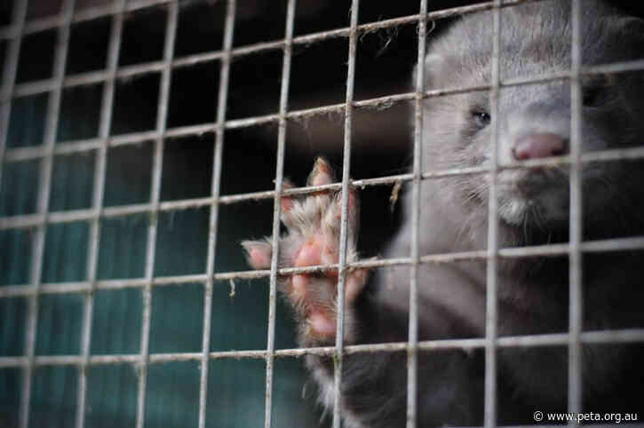 Good News for Minks: Sephora Bans Fur Eyelashes