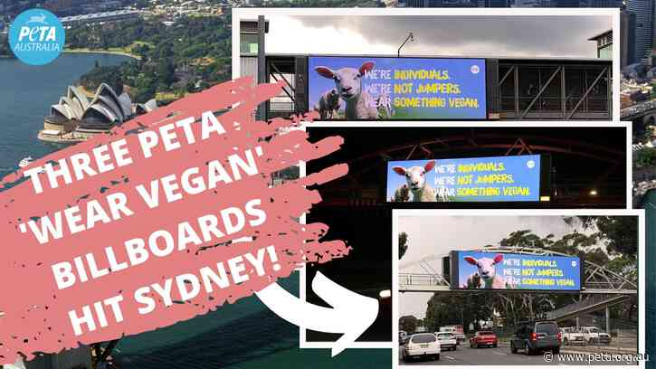 Giant Billboards in Sydney Urge Shoppers to 'Wear Vegan' This Winter