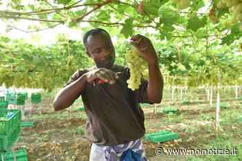 Lavoro nero: Flai-Cgil di Taranto, in gioco il futuro del settore agricolo - Noi Notizie