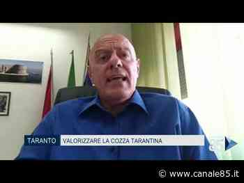 Taranto | Un progetto per valorizzare la cozza tarantina - Canale 85