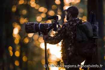 Verdun : approcher les ours de Slovénie grâce au photographe lorrain Teddy Bracard - France 3 Régions