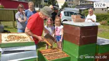 """Hagenow: Lernen im """"Bienen-Paradies""""   svz.de - svz.de"""