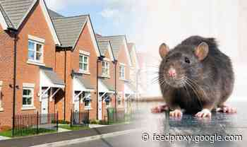 Property: How to get rid of rats from your home for good with this trick