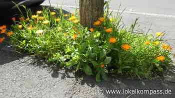 Akazienstraße: Blumen im Asphalt - Dortmund-Ost - Lokalkompass.de