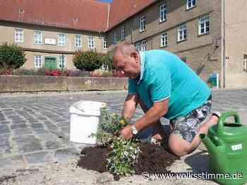 Initiativen: Blumen für die Schlaglöcher - Volksstimme