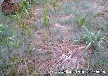 Geada fraca é registrada em Campo Bom; frio se mantém e há risco de chuva forte no Estado - Diário de Canoas