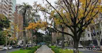El clima en Rosario: las hojas que se caen se pegan a la vereda - Rosario3.com