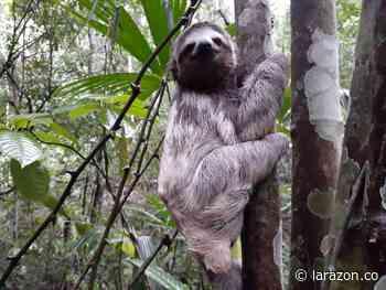 Liberan 83 ejemplares de fauna silvestre en reserva natural en Los Córdobas - LA RAZÓN.CO