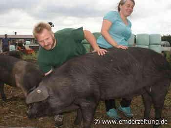 Dieses Schwein soll Instagram-Star werden - Emder Zeitung