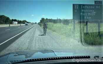 Bicyclist charged after allegedly riding on Hwy. 401 near Port Hope - Globalnews.ca