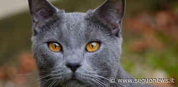 Il gatto contagiato da Lyssavirus ha morso quattro persone: sindaco di Arezzo emana due ordinanze - Seguo News - SeguoNews