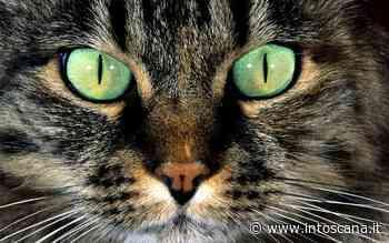 Gatto morde proprietaria ad Arezzo: isolato raro 'Lyssavirus' - Intoscana.it - inToscana