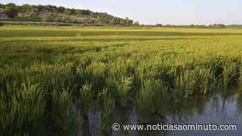 Portugal já pode exportar arroz em casca para o Paraguai - Notícias ao Minuto