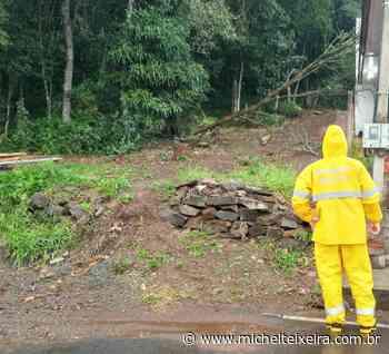Árvore cai sobre residência no bairro São Luiz, em Capinzal; ninguém ficou ferido - Michel Teixeira
