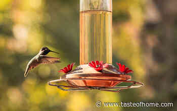 13 Questions About Hummingbird Feeders Answered by the Pros