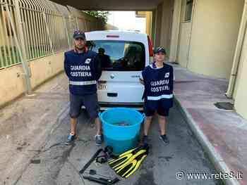 Francavilla al Mare, sequestrati 60 chili di polpi vivi - Rete8 - Rete8